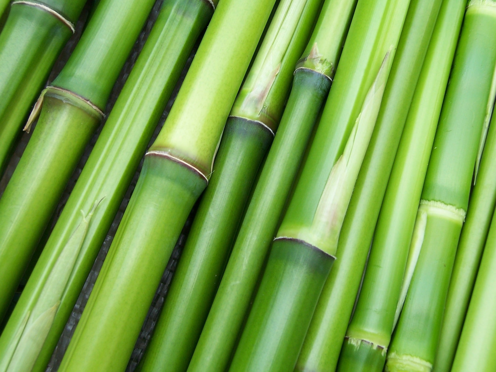 Bambus Outdoor Bekleidung