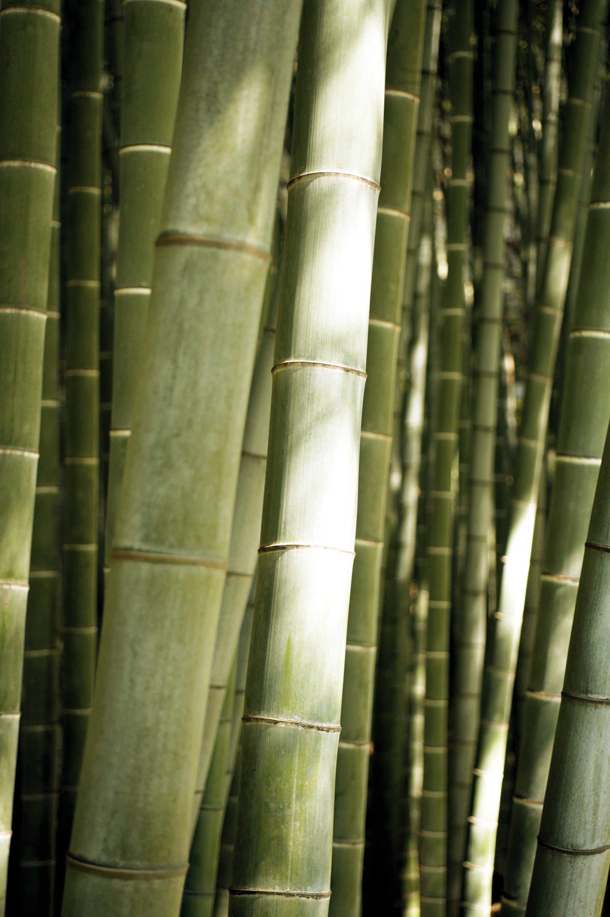 Bambus Outdoor Bekleidung Northland